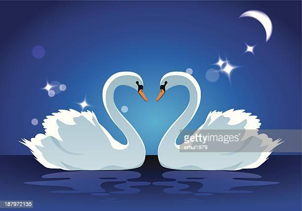 swan - swan stock illustrations