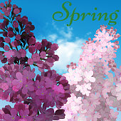 Sweet Lilac on the blue-sky background. Vector Lilac flowers, blue-sky and light cloud. The word spring written in green grass.