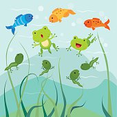 Tadpoles and little froglets