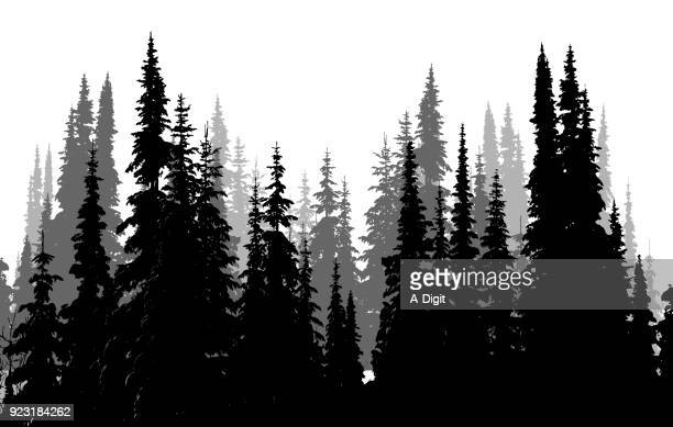 tall evergreen forest - tree stock illustrations