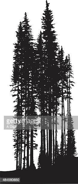 tall pine trees - tall high stock illustrations