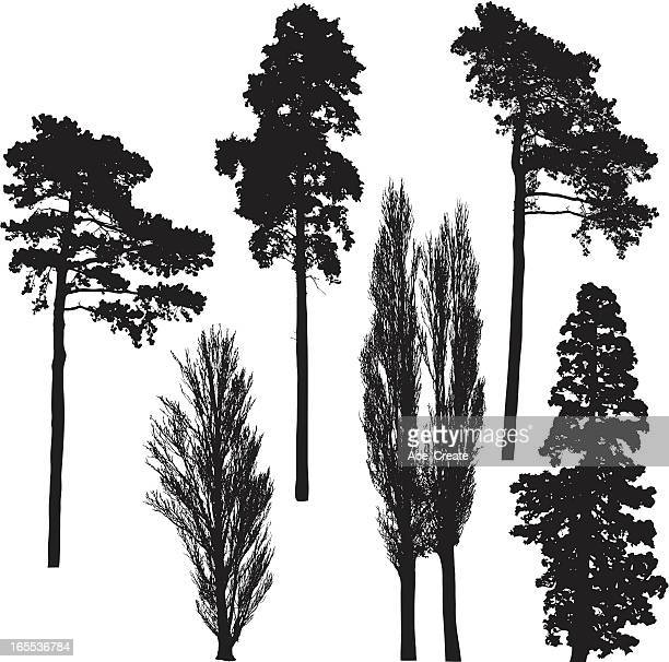 tall tree silhouette collection - tall high stock illustrations