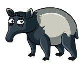 Tapir on white background