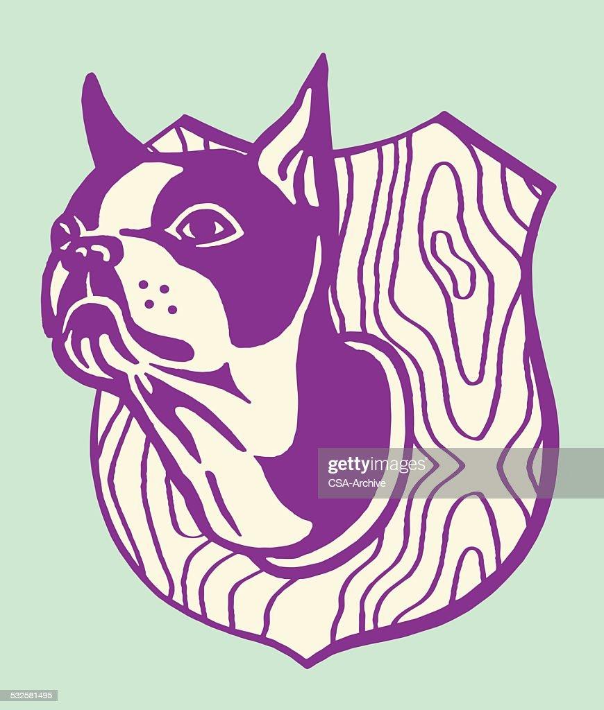 Taxidermy Boston Terrier