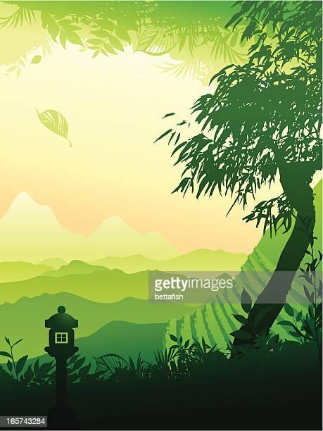 tea field - green tea stock illustrations, clip art, cartoons, & icons