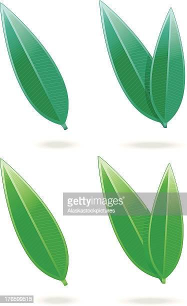 tealeafs / long leafs  (2varios). - green tea stock illustrations, clip art, cartoons, & icons