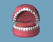 Teeth and gum engraving illustration