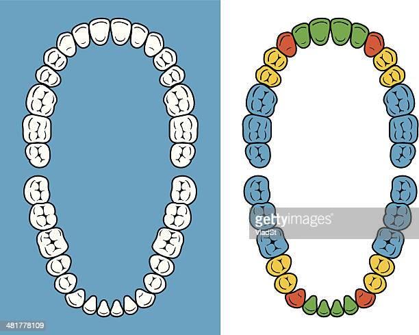 ilustraciones, imágenes clip art, dibujos animados e iconos de stock de dientes de cuadro - dientes humanos