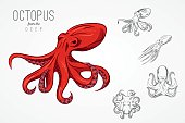 Template for emblem with octopus. Vector illustration.
