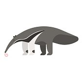 templateVector flat style illustration of anteater.
