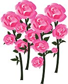 Tender Rose Blossoms with Stems as Fully Developed Flowers - in Balanced Hues of Red, Pink and White