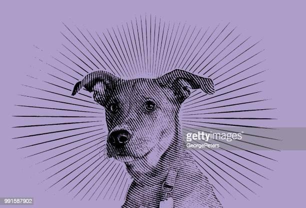 illustrazioni stock, clip art, cartoni animati e icone di tendenza di cane di razza mista terrier che spera di essere adottato - elettromagnetismo