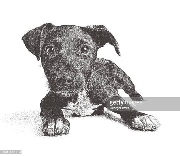 ilustraciones, imágenes clip art, dibujos animados e iconos de stock de cachorro de raza mixta de terrier con la esperanza de ser adoptados - pit bull terrier