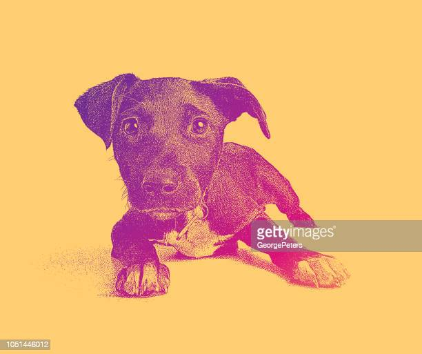 Terrier Mixed-breed puppy hoping to be adopted
