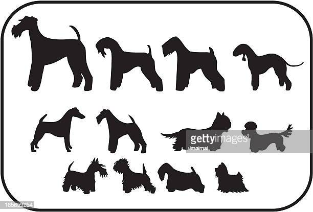 Terriers, Twelve Silhouettes
