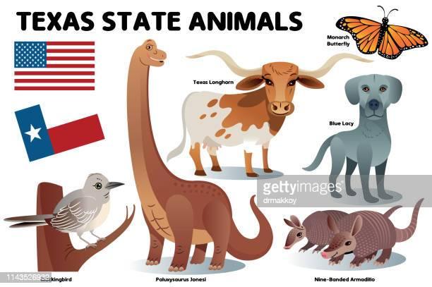 texas btate animals, - armadillo stock illustrations