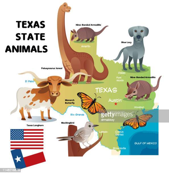 texas state animals - mockingbird stock illustrations, clip art, cartoons, & icons