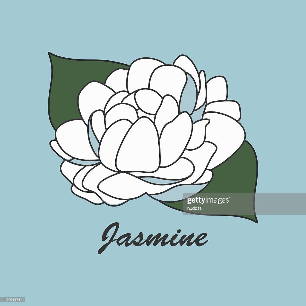 Thai White Jasmine Flower Vector Illustration Vector Art Getty Images