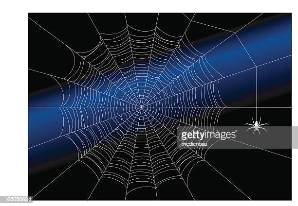 the almost perfect spiderweb - spider stock illustrations