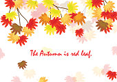The autumn card. The maple is in the autumn. It is vector illustration for card. It is draw and No trace or copy image.