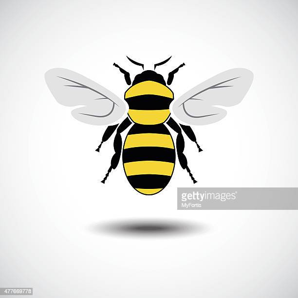 the bee. - bumblebee stock illustrations, clip art, cartoons, & icons