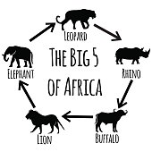 The big five of Africa.