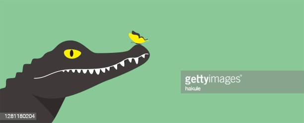 illustrations, cliparts, dessins animés et icônes de le papillon se tient sur le nez du crocodile, illustration vectorielle - crocodile