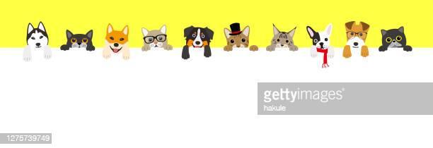 並ぶかわいい猫と犬 - ハスキー犬点のイラスト素材/クリップアート素材/マンガ素材/アイコン素材