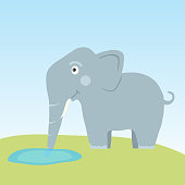 The elephant drinks water