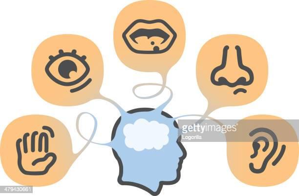 the five senses - sensory perception stock illustrations