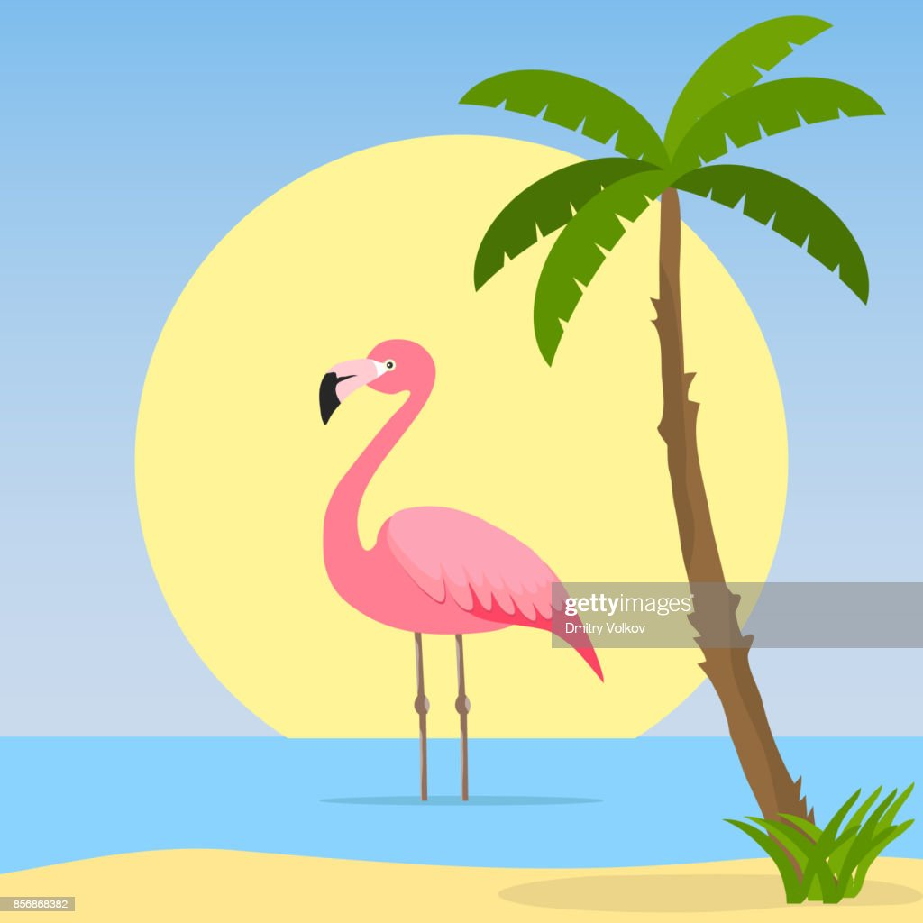 The flamingo stands in the water.