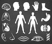 The Human Body Vector Icon Set on Black Chalkboard