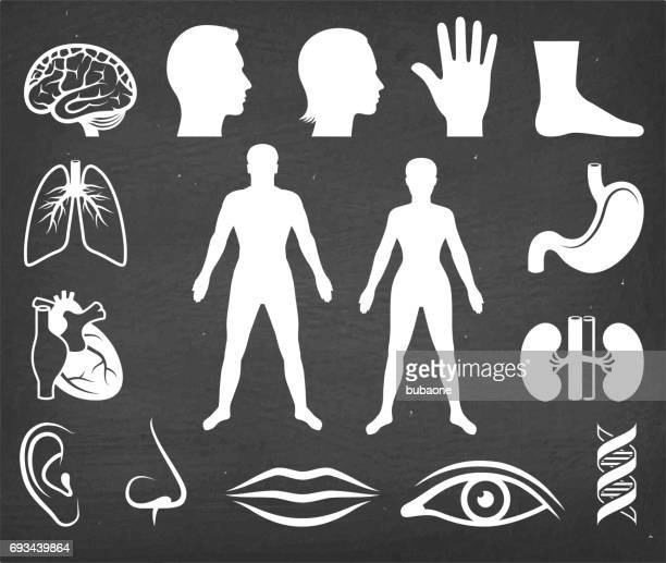 the human body vector icon set on black chalkboard - the human body stock illustrations