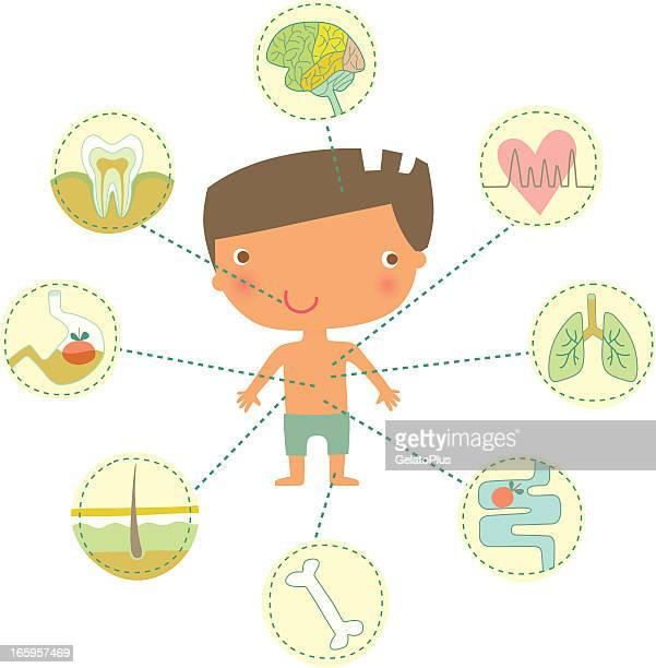 menschlicher körper - human body part stock-grafiken, -clipart, -cartoons und -symbole