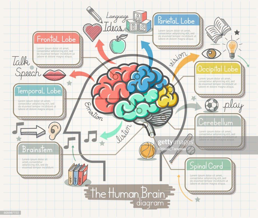 The Human Brain Diagram Doodles Icons Set.
