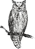 The owl sitting on a branch. Vector illustration
