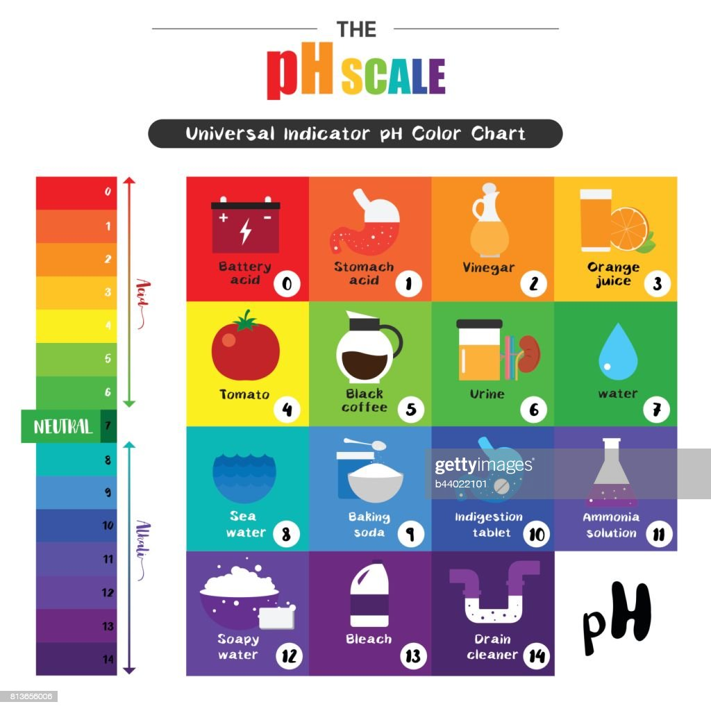 The ph scale universal indicator ph color chart diagram vector art the ph scale universal indicator ph color chart diagram vector art nvjuhfo Images