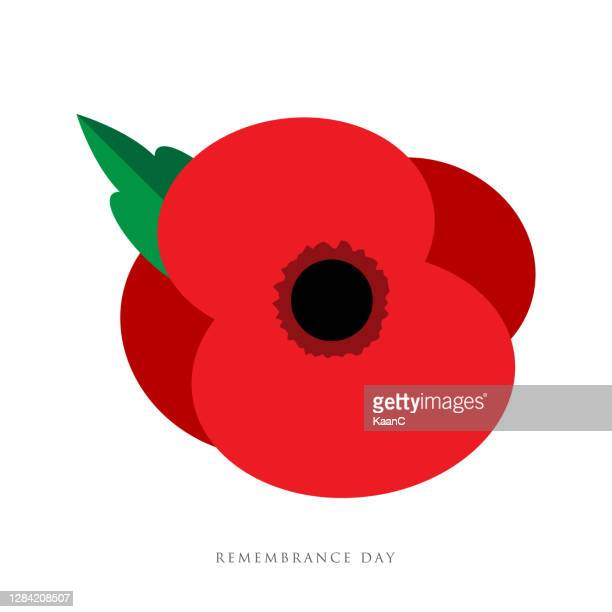 the remembrance day. poppy appeal. flower for remembrance day, memorial day, anzac day in new zealand, australia, canada and great britain. - remembrance sunday stock illustrations
