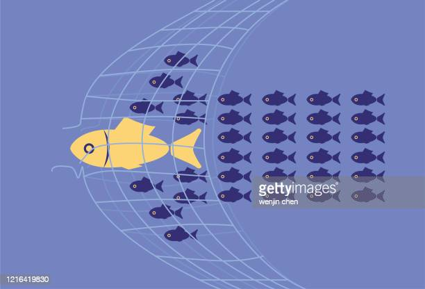 the school of fish forming an arrow shape breaks through the net - netting stock illustrations