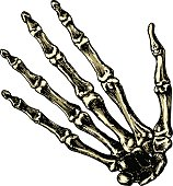 The skeleton human hand on a blank background