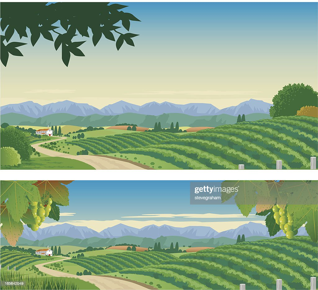 The Vineyard : stock illustration