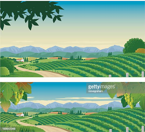 the vineyard - vine stock illustrations