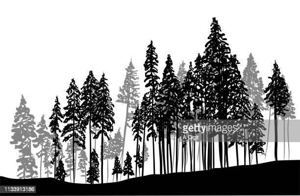 thick forest trees - coniferous tree stock illustrations, clip art, cartoons, & icons
