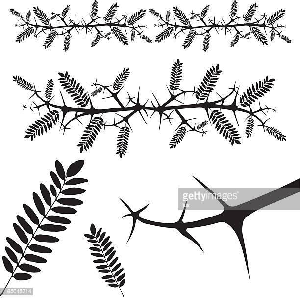 thorn - vector