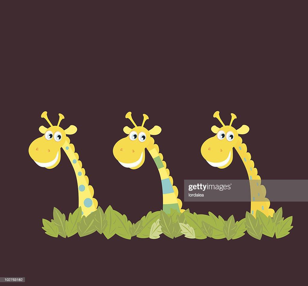 Three african safari giraffes