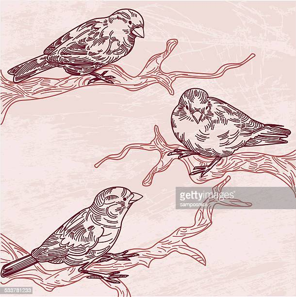 three birds on branches - pen and ink stock illustrations, clip art, cartoons, & icons