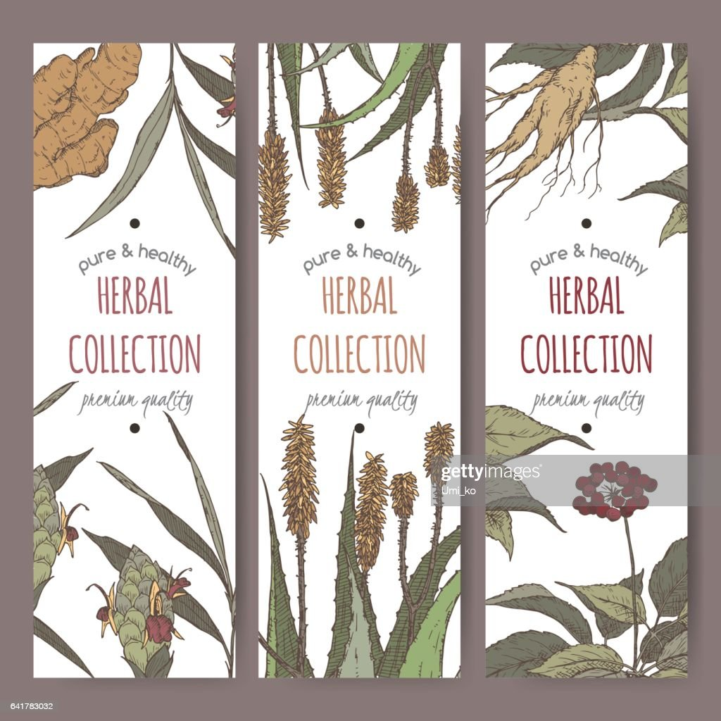 Three color vector herbal tea labels with ginger, aloe and ginseng