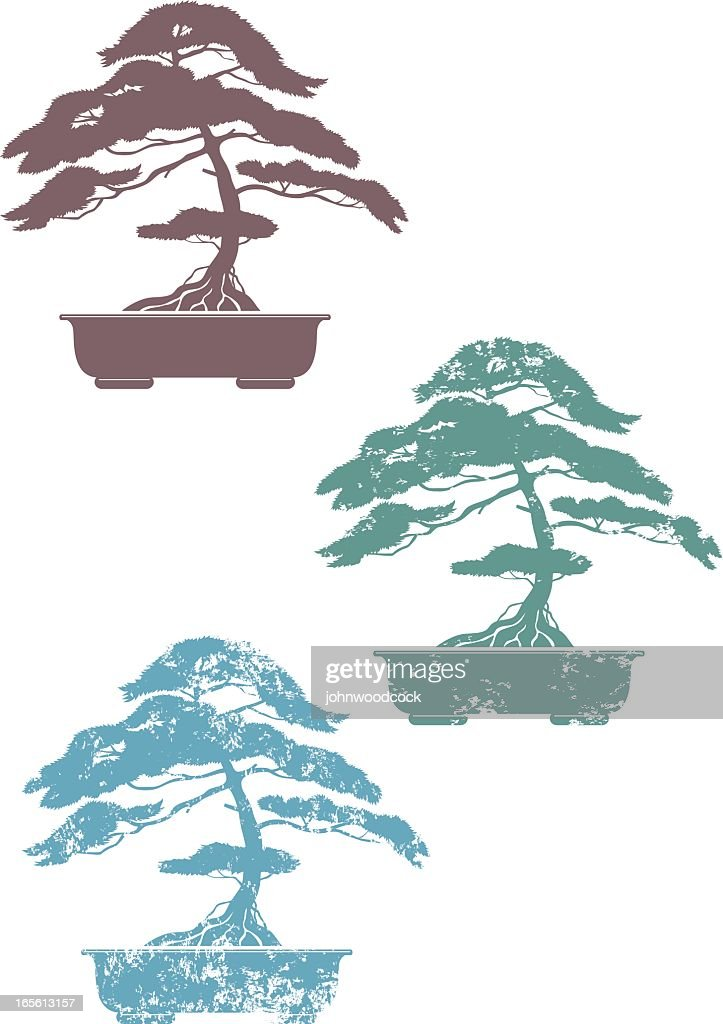 Three colored bonsai on white background