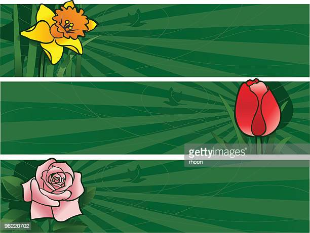 three coloured banners - lily family stock illustrations