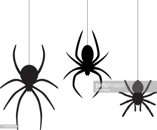 ilustrações de stock, clip art, desenhos animados e ícones de three dangling spiders - aranha